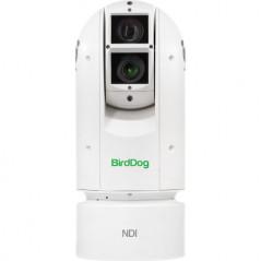 BirdDog EYES A300 IP67 WP NDI Kamera PTZ z SDI (biała)