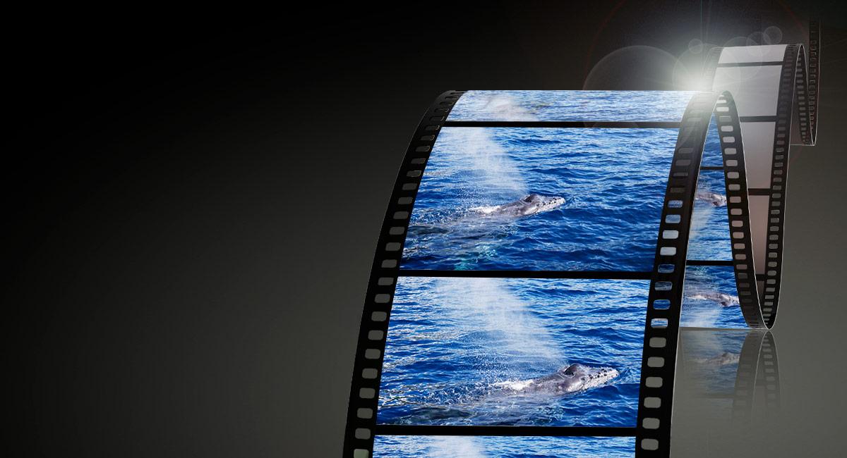 Obs%C5%82uga_wideo_%E2%80%94_nagrywanie_doskona%C5%82ych_film%C3%B3w_wideo_3.jpg